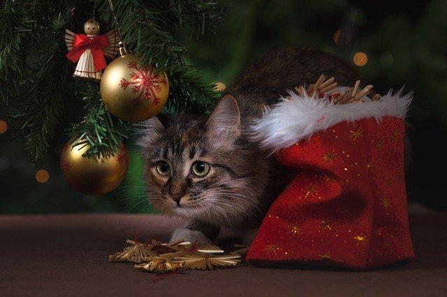 Urgences-veterinaires-dangers-noel-chat-sapin2.jpg